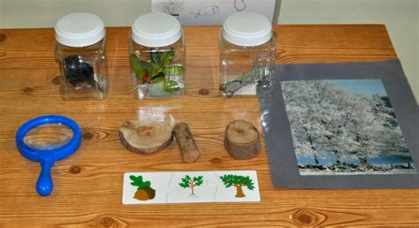 kara s classroom all about trees preschool science center 174 | DSC 0582