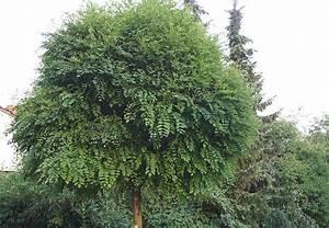 Bäume Und Sträucher Für Den Garten : kleine b ume im garten obi ratgeber ~ Michelbontemps.com Haus und Dekorationen