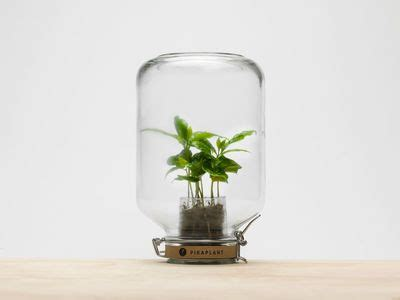 .hamburgers deserts space cake drinks juices soft drinks various drinks smoothies shakes milk hot milk tea coffee snacks & candy celebrities gallery crew events news locations. Jar Self-sufficient greenhouse - / Mini coffee bush included - H 28 cm by Pikaplant   Flowers in ...