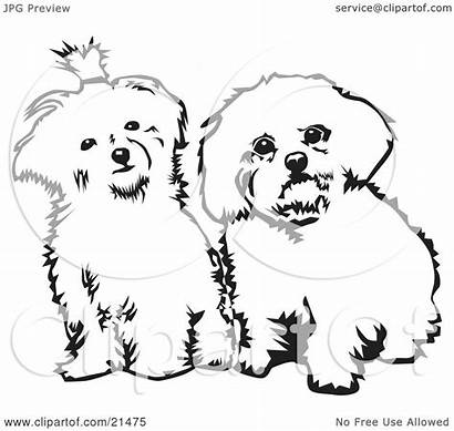 Maltese Dogs Clipart Side Sitting Coloring Looking