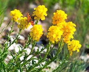 Blumen Im Frühling : schmetterling auf dem gelben blumen im fr hling stock foto colourbox ~ Orissabook.com Haus und Dekorationen