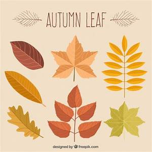 Beautiful hand-drawn autumn leaves Vector | Free Download