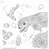 Seal Pattern Colouring Underwater Hobbycraft Coloring Adult Ocean Colour Patterns Therapeutic Knitting Sheets Eyes Scenes Anastasia Catris sketch template