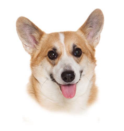 dog photo digital ceramic decals