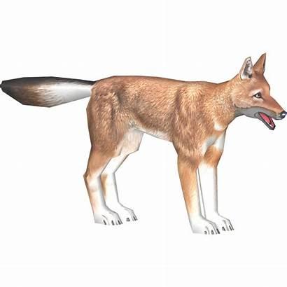 Fox Arabian Makaio