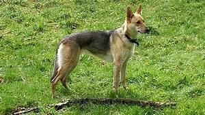 Can de Palleiro, en busca de su origen www doogweb es