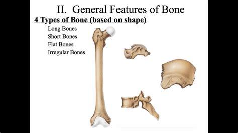 Chapter 7 The Skeletal System