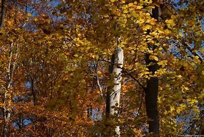 Season Fall Freebigpictures Autumn Previous Sun Trees