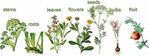Useful Plant Parts Great Images And Information