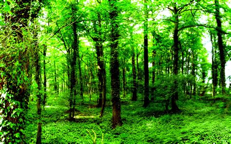 Permalink to Nature Wallpaper Green
