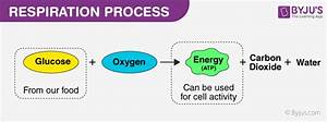 Aerobic Respiration  U2013 An Overview  Steps And Its Process