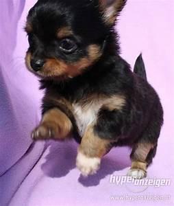 So Und So : was gibt es f r hunde die immer klein bleiben mischling kleine hunde ~ Orissabook.com Haus und Dekorationen