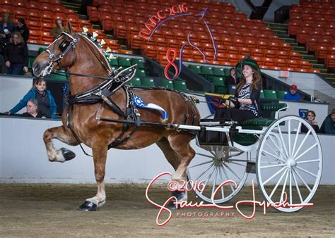horse progress clydesdale breeders gentle giants days westerfeld tv minick pam draft farrier lynch youth journal exhibitor brian horses stoltzfus