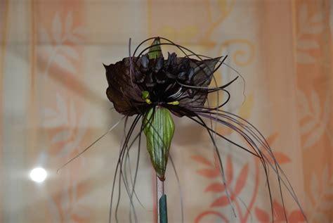 schwarze schoenheit foto bild pflanzen pilze
