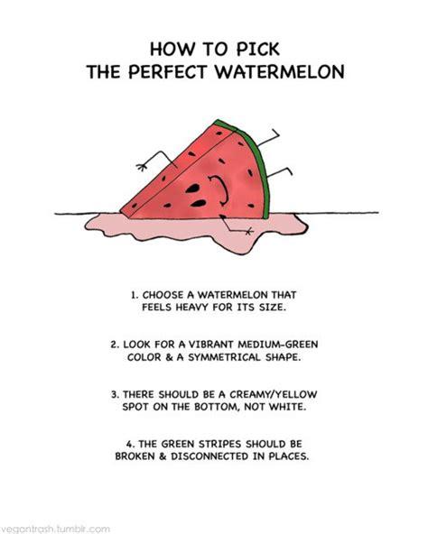 quotes  summer watermelon quotesgram