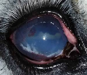 Recognizing And Treating Corneal Ulcers In Horses  U2013 The Horse