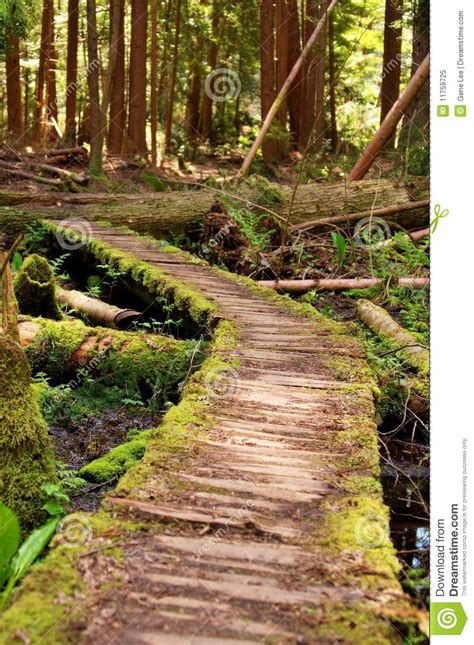 crooked path stock image image   planks nature