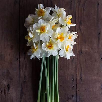 Flower Narcissus Drift Flowers Floret Floretflowers Bloom
