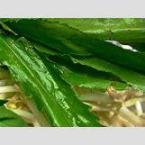 Ladybugs On Plants   400 x 300 jpeg 23kB