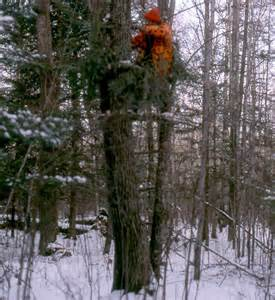 Whitetail Deer Hunting From a Tree Stand