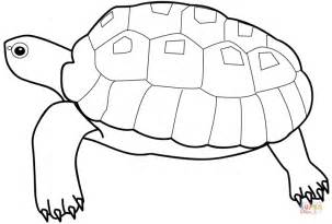 HD wallpapers turtle coloring page