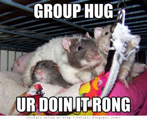 Group Hug Meme - funny group hug pictures www pixshark com images galleries with a bite