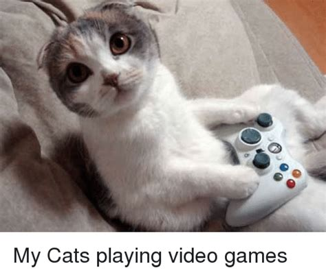 cats playing video games cats meme  sizzle