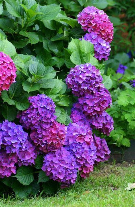 dark purple l shade 783 best pretty purple things images on pinterest plants