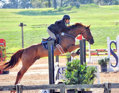 thoroughbred stephanie cook jumper horse mahone jerry lease checkmate texas competing ring end