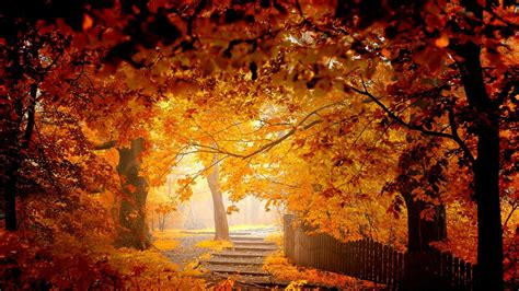 autumn landscape golden nature wallpaper photography