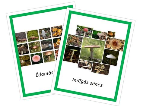 Komplekts ēdamās + indīgās sēnes - Flora - Veikals - MOMtesori