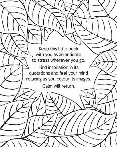 Calm Coloring Books Relaxation Kay Drawings Sinden