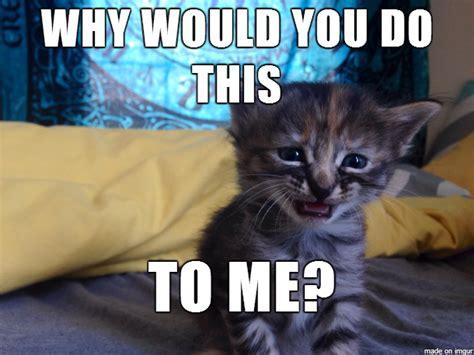 Sad Cat Meme - move over grumpy cat purrmanently sad cat is taking over