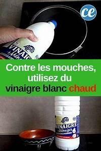 Comment Chasser Les Mouches : vinaigre blanc chaud le r pulsif le plus efficace contre ~ Melissatoandfro.com Idées de Décoration