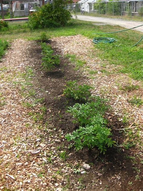 Waltham Fields Community Farm Featured Learning Garden