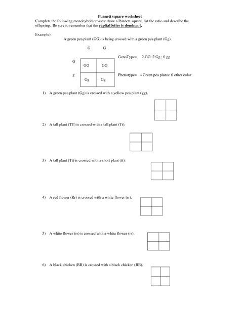 cross worksheet monohybrid cross worksheet