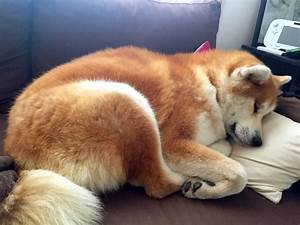 Taille Moyenne Bébé : chien taille moyenne carabiens le forum ~ Nature-et-papiers.com Idées de Décoration