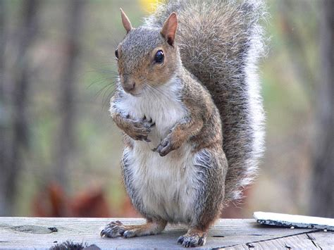 do squirrels like oranges 7 garden plants that really do repel squirrels total survival