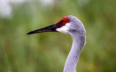 pictures birds of paradise orlando sentinel