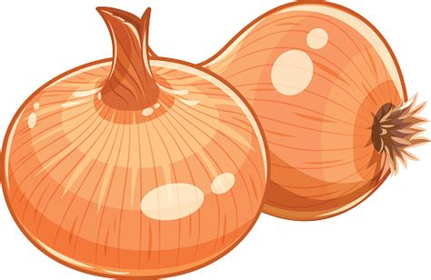 common onion clipart   cliparts  images  clipground