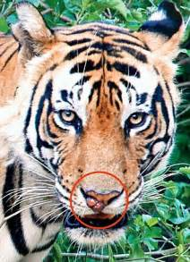 Sariska Tiger Reserve Sorry State Daily Mail Online