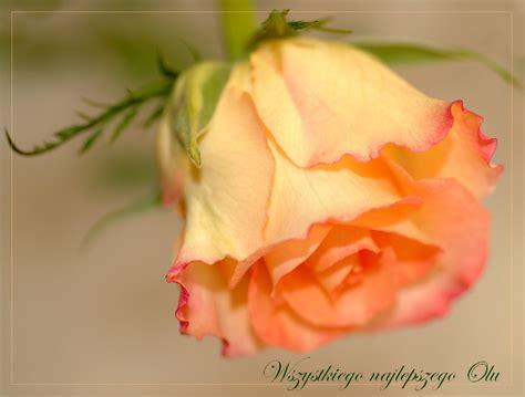 Happy Birthday Dear Ola By Grandma S On Deviantart