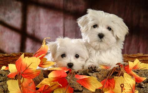 50+ Cute Dogs Wallpapers  Dog Puppy Desktop Wallpapers