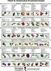 Vegetable Planting Guide