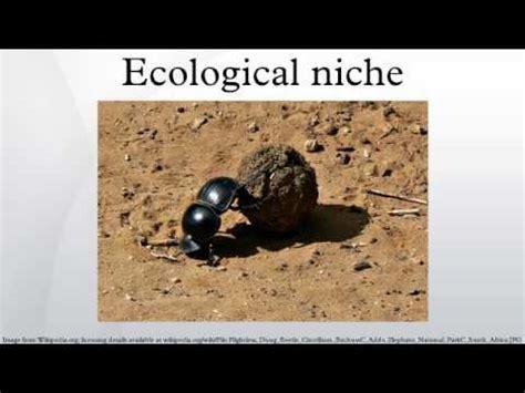 Ecological Niche Youtube