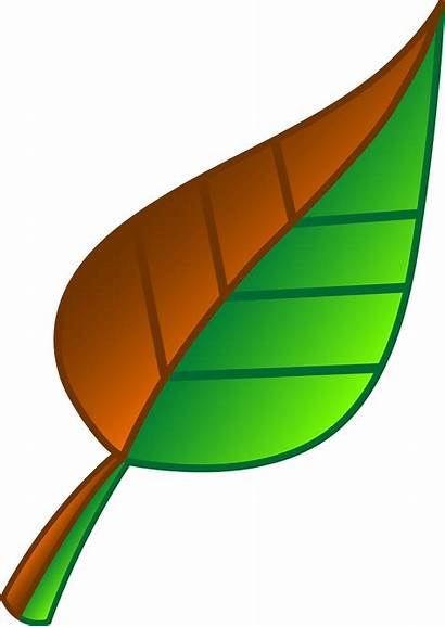 Leaf Brown Clip Vector Half Sweetclipart