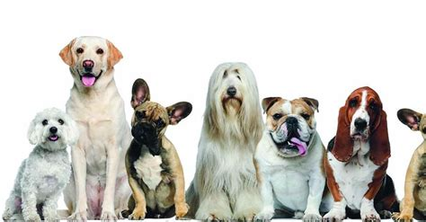 dog breeds dogs breed favorite ranker animals pet whats klce