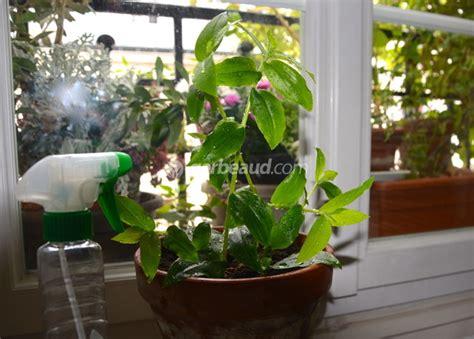 le pour plante interieur brumiser les plantes d int 233 rieur pourquoi comment