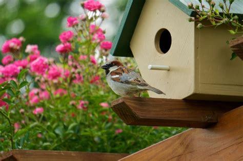 bird gardens flowers  plants  attract wildlife