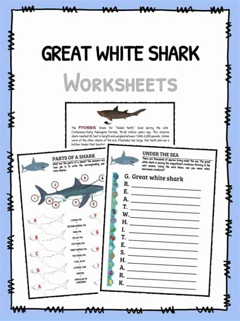 Great White Shark Facts, Worksheets & Habitat Information For Kids